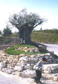 Label pierre for Decoration autour d un olivier
